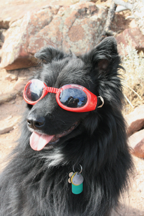 Black Dog with Red Glasses