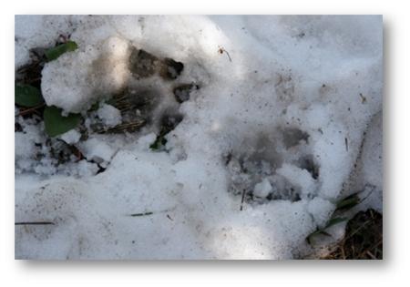 paw-print-1