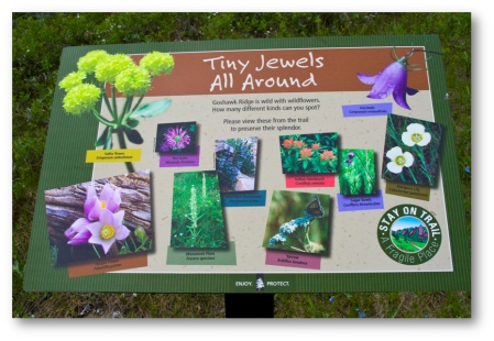 Tiny Jewels signage (shadowed)