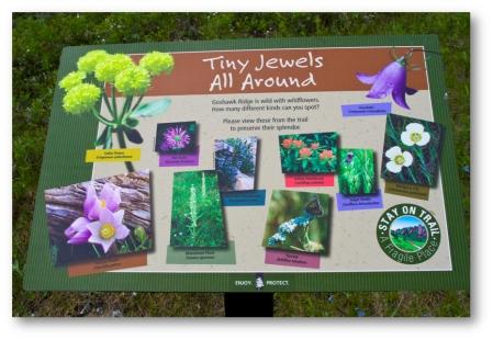 Tiny Jewels signage (shadowed)