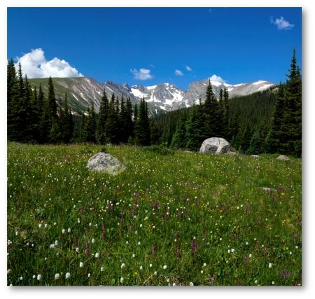 Indian Peaks Wildflower Vista shadowed (10x10)