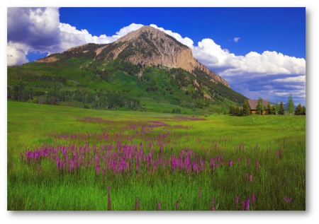 Mt. Crested Butte with Little Pink Elephant Herd (Pedicularis groenlandica)