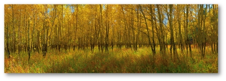 CaribouRanchAspens_PTS_ shadowed(12x4)