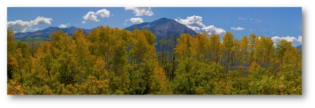 Kebler Pass Aspen Vista Shadowed (10x3)