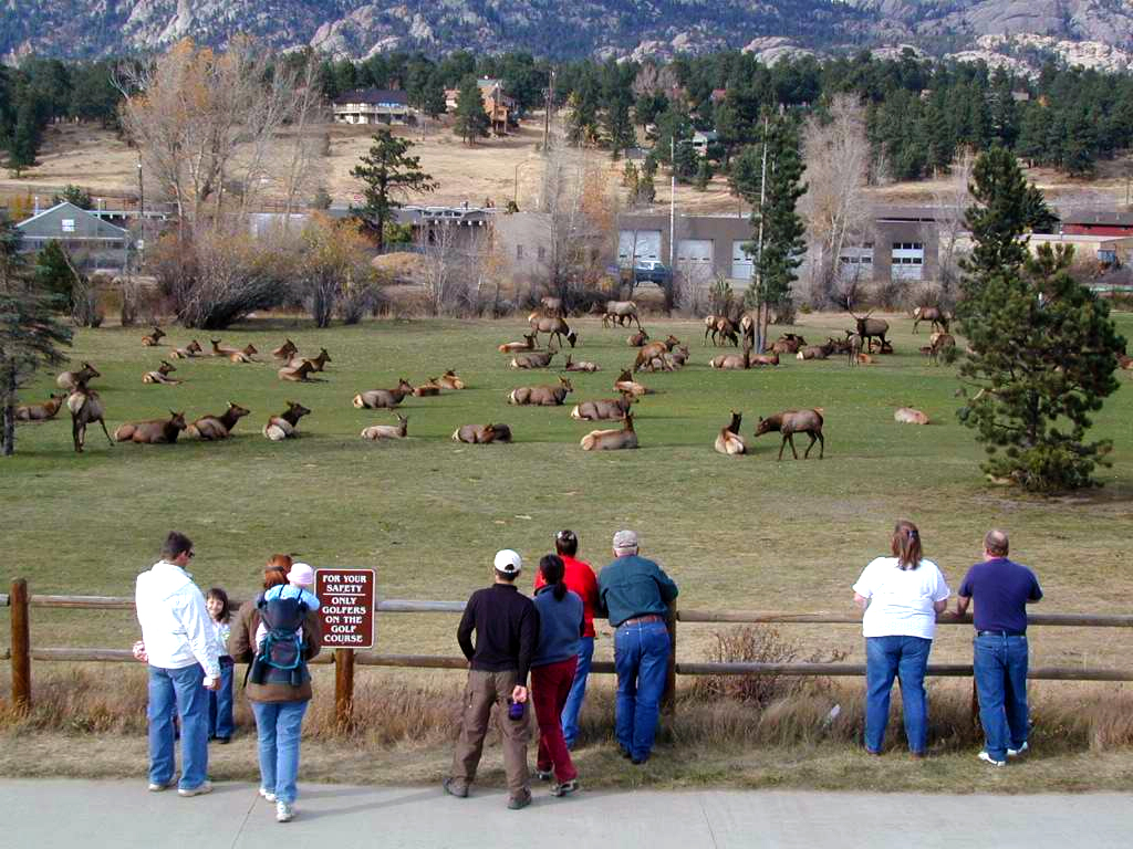 """elk park senior personals There's nary an elk to be seen """"we put ourselves in a box, and we're trying to get out of that box,"""" said john pierce, senior vice president at tower investments llc the company, which."""