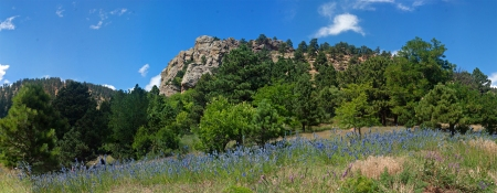 "A Floral Spectacle in the Sanitas Valley (  40° 1'19.19""N, 105°17'44.89""W)"