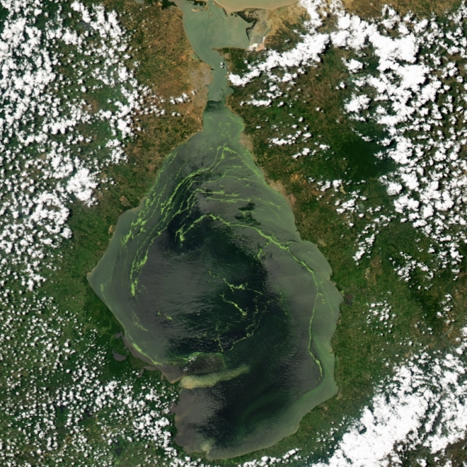 Green swirls of duckweed dominate the center of Venezuela's Lake Maracaibo in this Moderate Resolution Imaging Spectroradiometer (MODIS) image acquired by NASA's Aqua satellite on June 26, 2004.