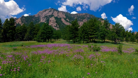 Bear Peak Bergamot