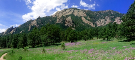 Bear Peak Bergamot Vista-2 (12x5.4)