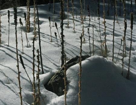 Snow Pix -4