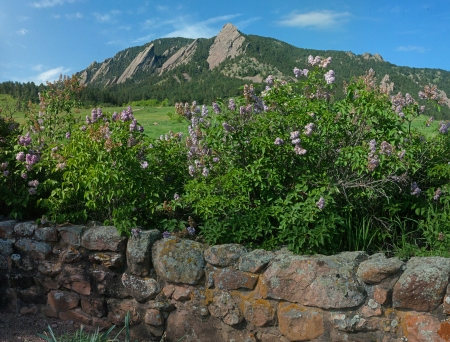 flatirons-with-lilacs-214x10