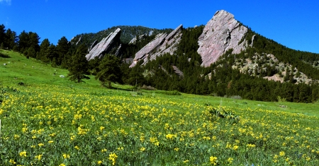 spring-flatirons-with-golden-banner-24x12-vista
