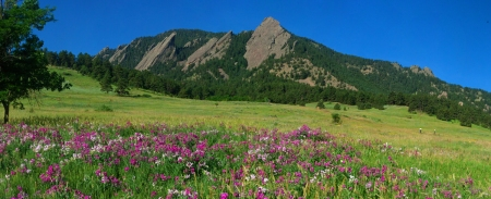 summer-flatirons-with-pink-sweetpea-flowers-10x4